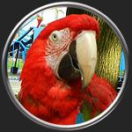 Картинка на тему Символика в искусстве - птицы