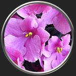 Картинка на тему Символика в искусстве - растения